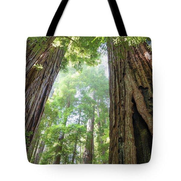 Coastal Redwoods  Tote Bag