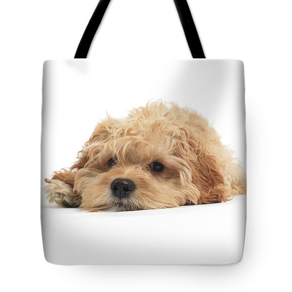 Cockapoo Dog Isolated On White Background Tote Bag