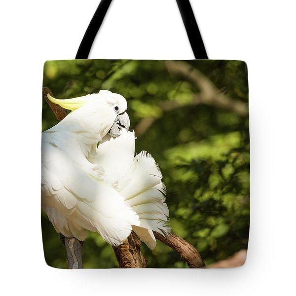 Cockatoo Preaning Tote Bag
