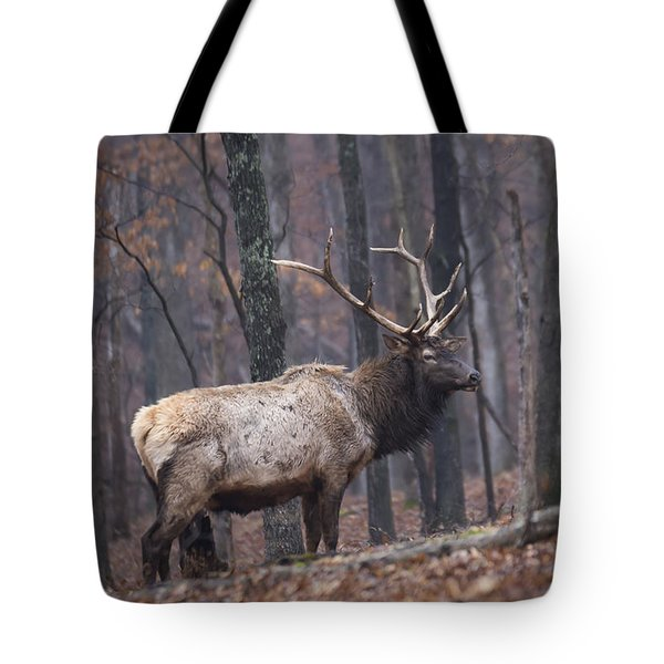 Chilly Misty Morning Tote Bag by Andrea Silies