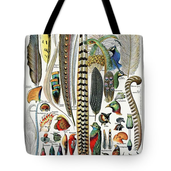 Collection Of Different Plume Types Tote Bag