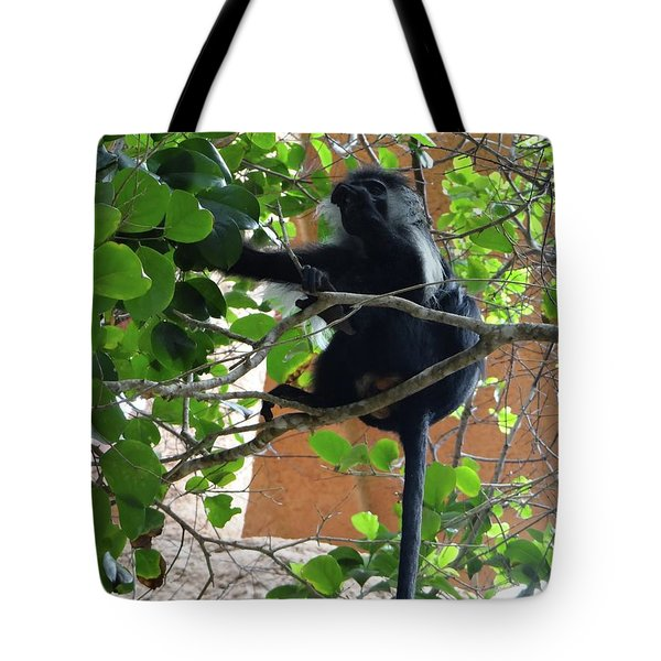 Colobus Monkey Eating Leaves In A Tree - Full Body Tote Bag