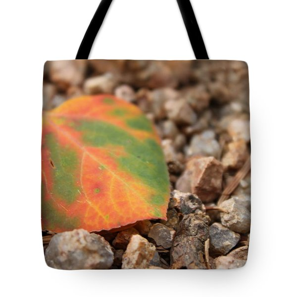 Colorado Fall Colors Tote Bag by Christin Brodie