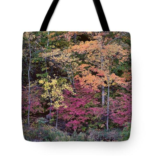 Colorful Fall Foliage Tote Bag
