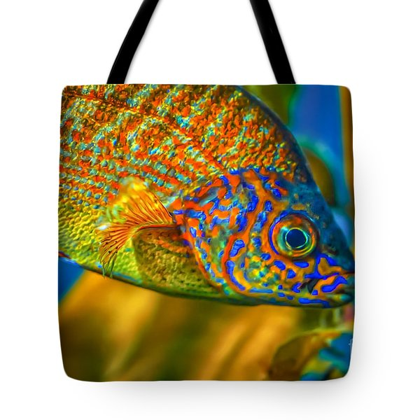 Tote Bag featuring the photograph Colorful Fish by Mitch Shindelbower