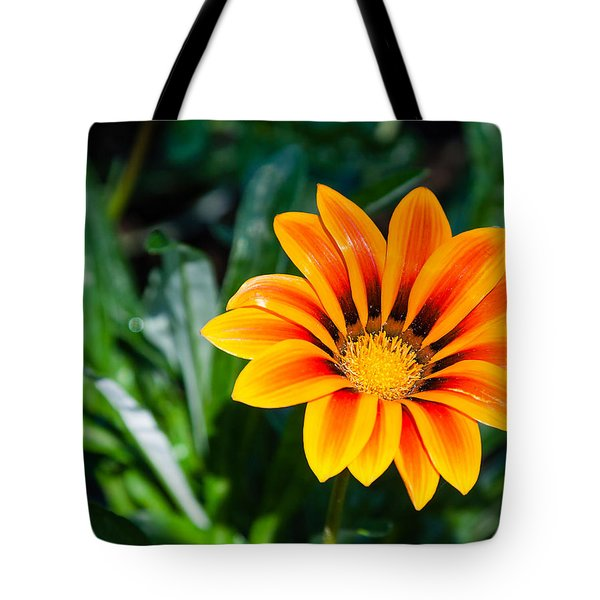 Colorful Gazania Tote Bag