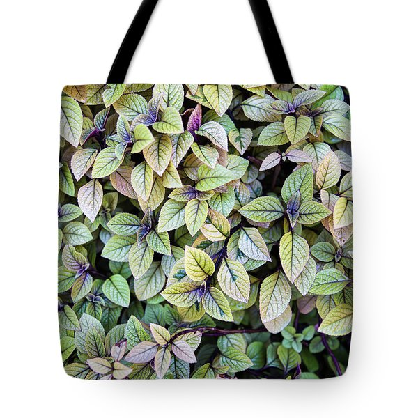 Tote Bag featuring the photograph Colorful Leaves Bush,the Color And Textured Of Nature In Natural by Jingjits Photography