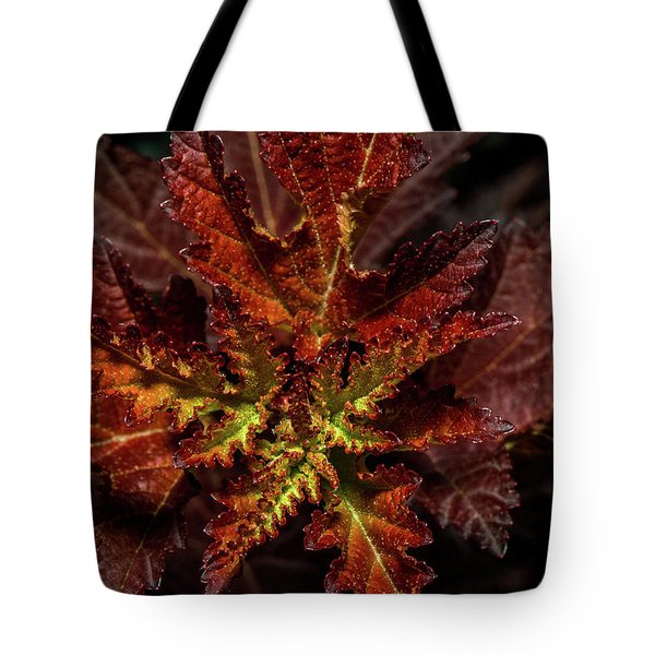 Tote Bag featuring the photograph Colorful Leaves by Paul Freidlund