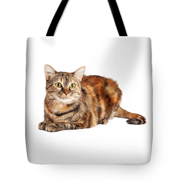 Colorful Tortie Cat Laying Looking Forward Tote Bag