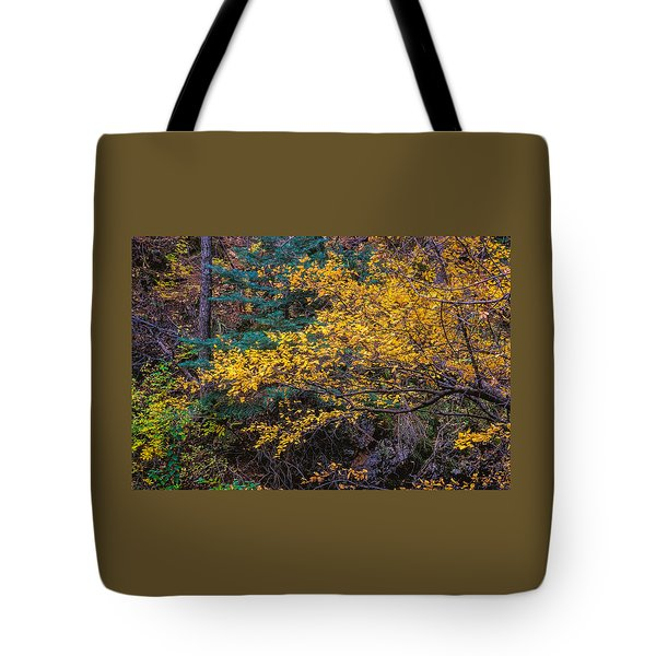 Colorful Trees Along The Creek Bank Tote Bag by John Brink