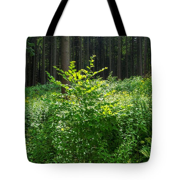 Colors Of A Forest In Vogelsberg Tote Bag