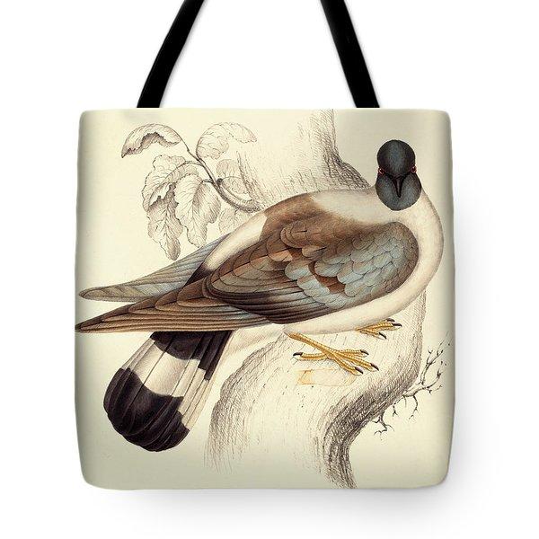 Columba Leuconota, Snow Pigeon Tote Bag by Elizabeth Gould