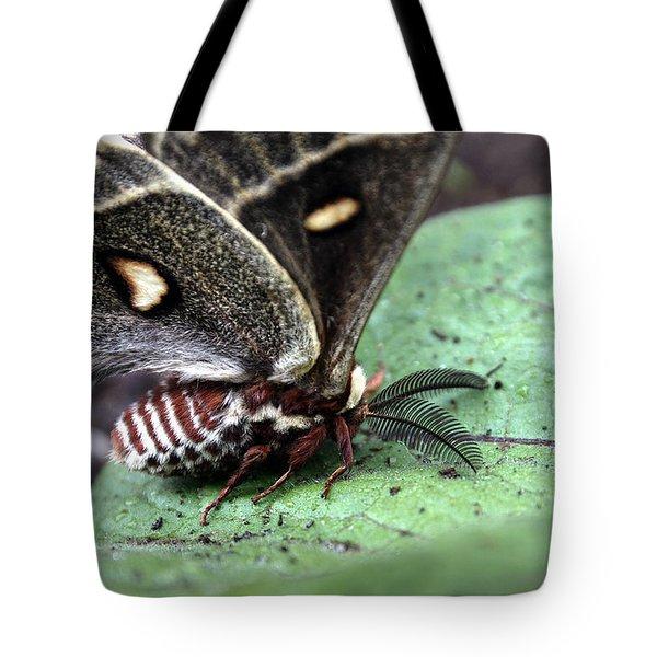Columbia Silk Moth Tote Bag