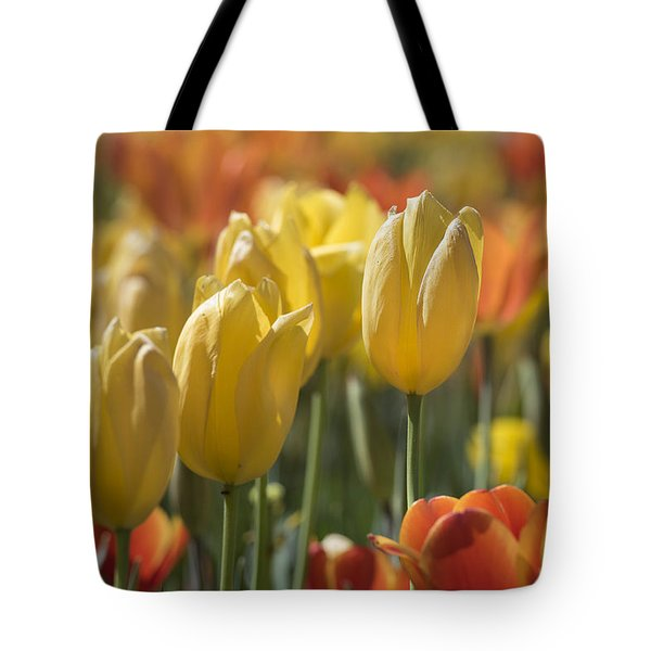 Coming Up Tulips Tote Bag