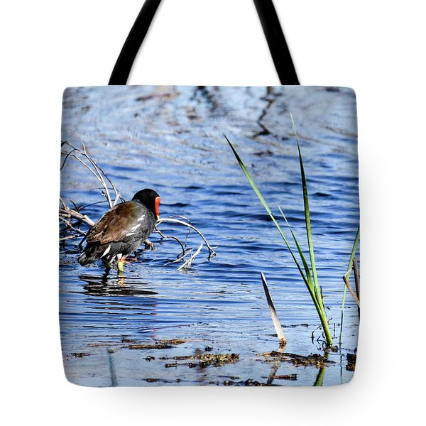 Common Gallinule Tote Bag