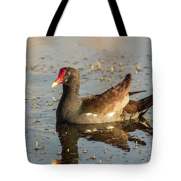Common Gallinule Tote Bag by Robert Frederick