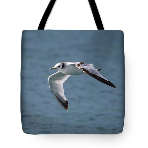 Common Gull Tote Bag