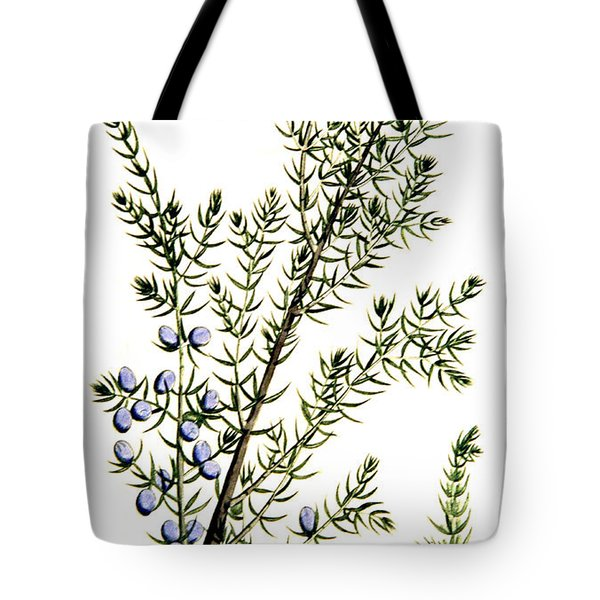 Common Juniper Alchemy Plant Tote Bag
