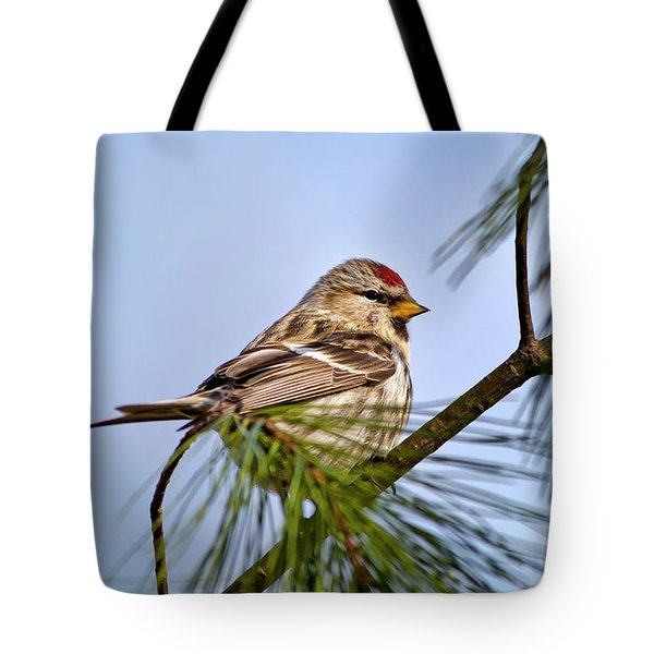 Tote Bag featuring the photograph Common Redpoll Bird by Christina Rollo