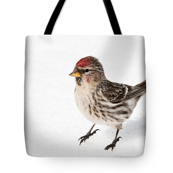 Tote Bag featuring the photograph Common Redpoll- Sizerin Flamme - Acanthis Flammea by Nature and Wildlife Photography