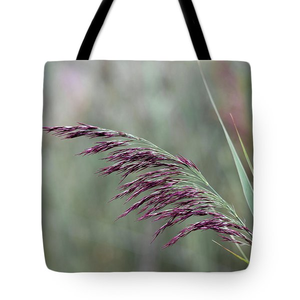 Tote Bag featuring the photograph Common Reed Flower Stalk by Scott Lyons
