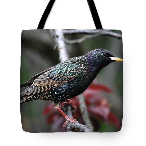 Common Starling Tote Bag