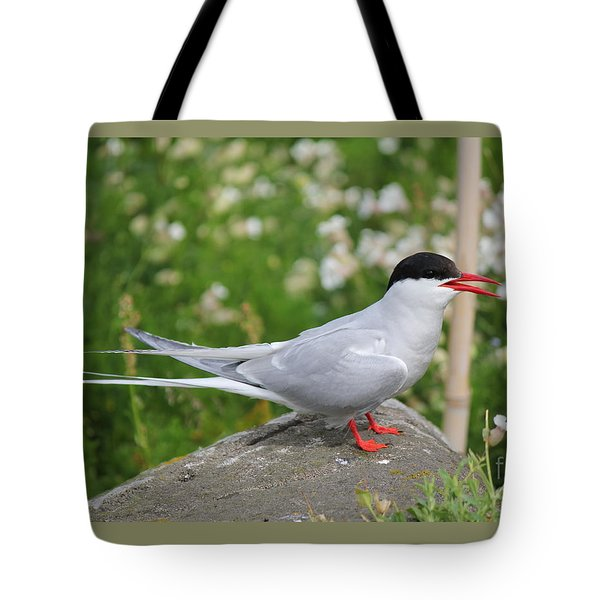 Common Tern Tote Bag by David Grant