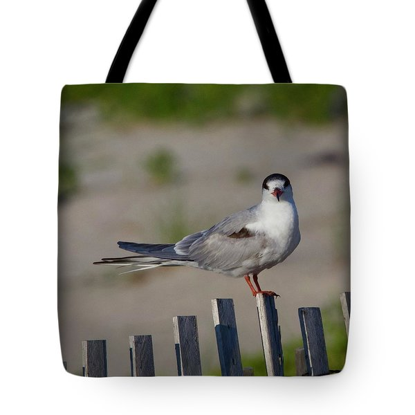Common Tern Tote Bag