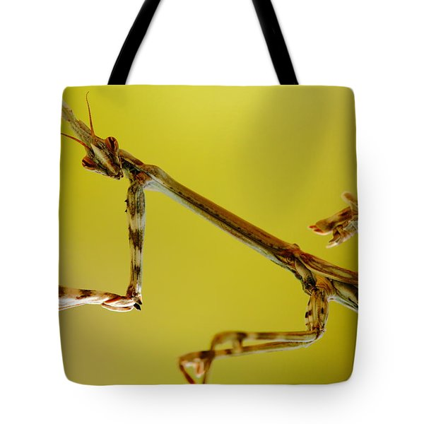 Tote Bag featuring the photograph Cone Head Mantis by Richard Patmore
