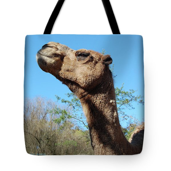 Contemptuous camel digital art by digiart diaries by vicky b fuller