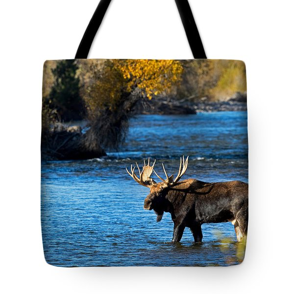 Cool Moose Tote Bag
