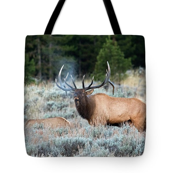 Cool Mornings Tote Bag