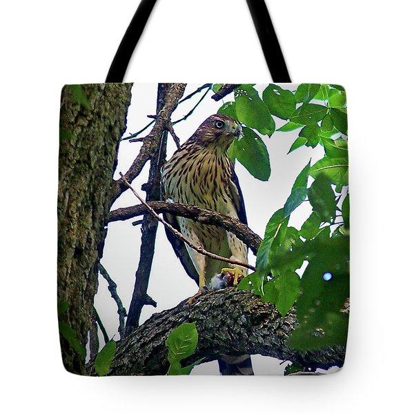 Cooper Hawk Tote Bag by Sue Stefanowicz