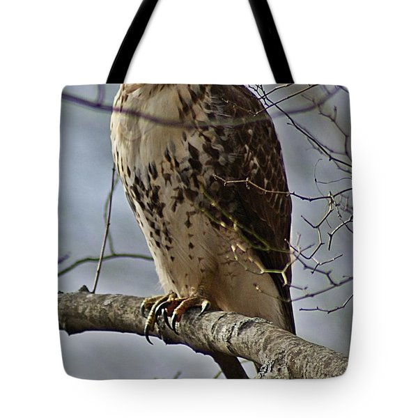 Cooper's Hawk 2 Tote Bag by Joe Faherty