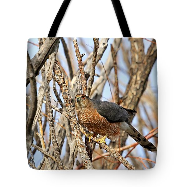 Tote Bag featuring the photograph Cooper's Hawk by Donna Kennedy