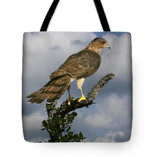 Cooper's Hawk On Watch Tote Bag