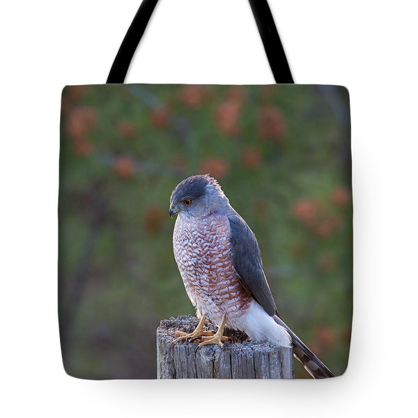 Coopers Hawk Perched Tote Bag