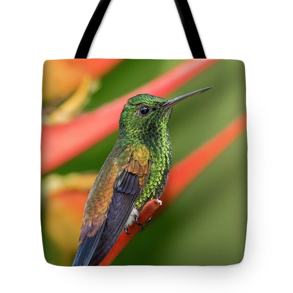 Tote Bag featuring the photograph Copper Rumped Hummingbird by Rachel Lee Young