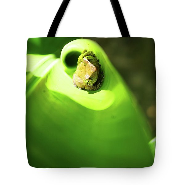 Tote Bag featuring the photograph Coqui Frog by Anthony Jones