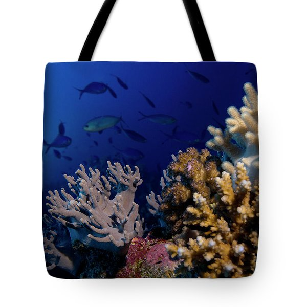 Tote Bag featuring the photograph Coral And Fish by Rico Besserdich