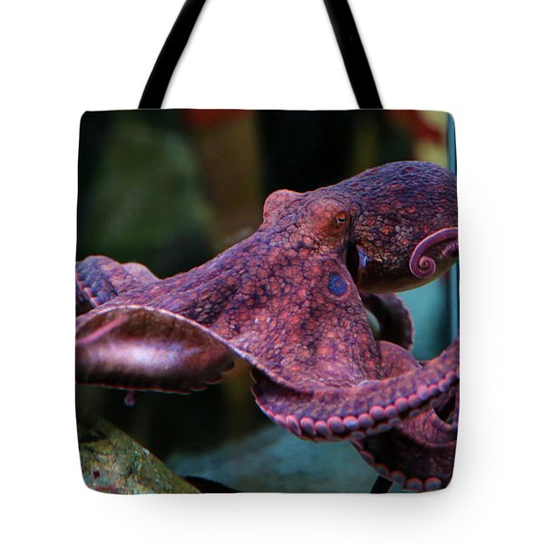 Tote Bag featuring the photograph Cornered by T A Davies