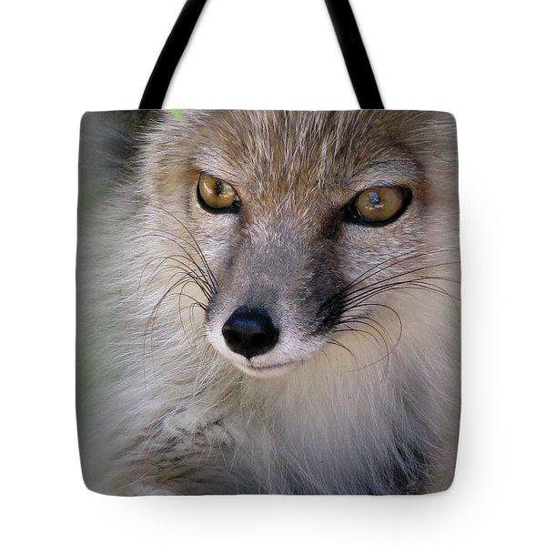 Tote Bag featuring the photograph Corsac Fox- Vulpes Corsac 03 by Ausra Huntington nee Paulauskaite
