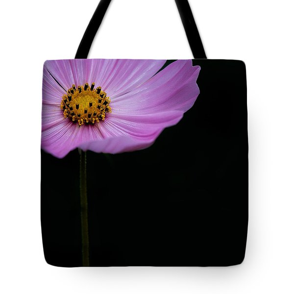 Tote Bag featuring the photograph Cosmos On Black by Lisa Knechtel