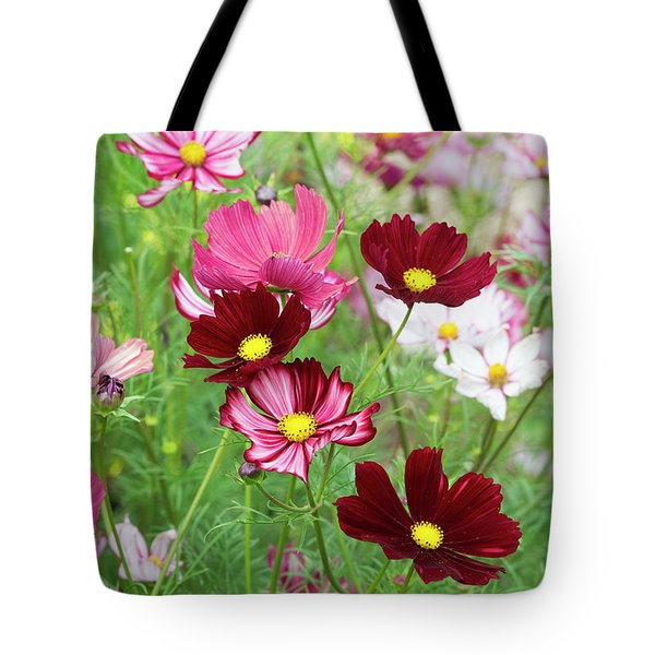 Tote Bag featuring the photograph Cosmos Velouette by Tim Gainey