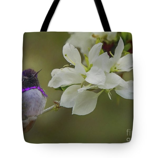 Tote Bag featuring the photograph Costas Hummingbird On An Anacacho Orchid Branch by Teresa Wilson