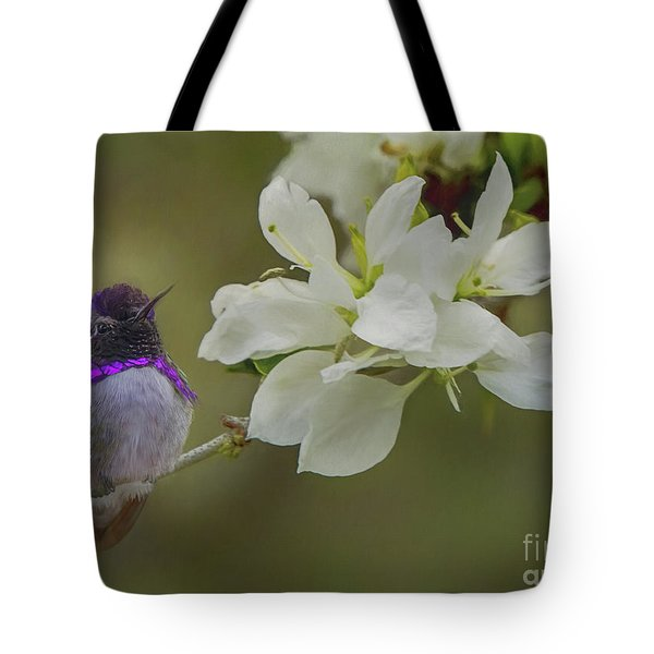 Costas Hummingbird On An Anacacho Orchid Branch Tote Bag