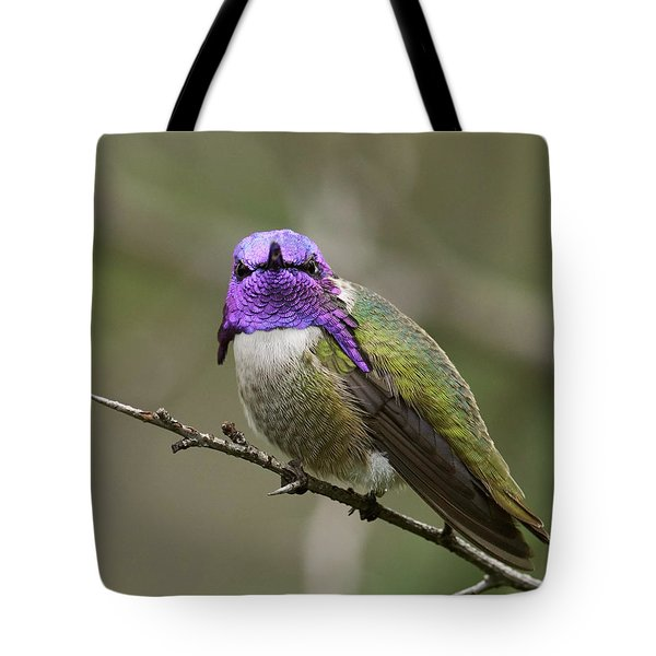 Costa's Hummingbird, Solano County California Tote Bag