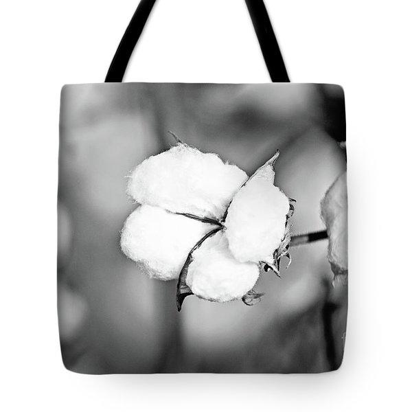 Cotton Plant - Bw Tote Bag