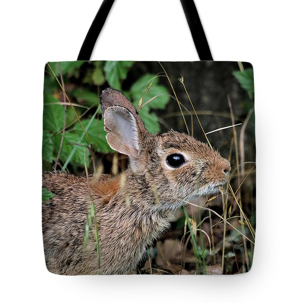 Tote Bag featuring the photograph Cottontail Bunny Breakfast by Sheila Brown