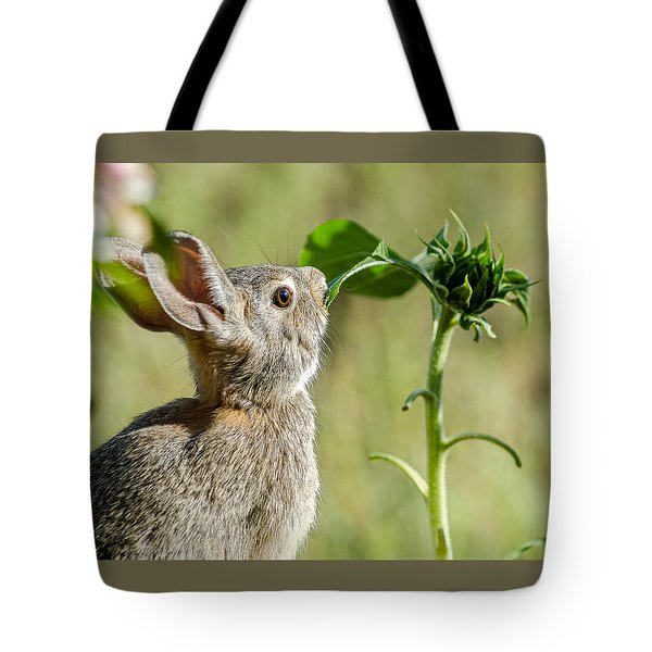 Cottontail Rabbit Eating A Sunflower Leaf Tote Bag by John Brink